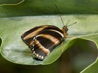 Tuesdays Only — Free Entry to Butterfly Pavilion