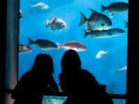 National Aquarium Half Price Friday Nights