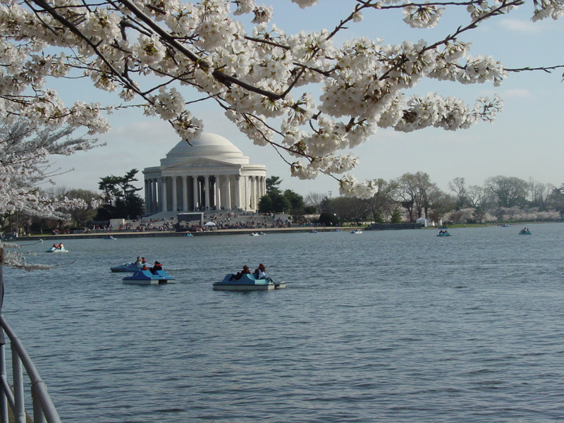 Paddle Boats on Tidal Basin Jefferson Memorial - Photo Credit - courtesty of washington.org