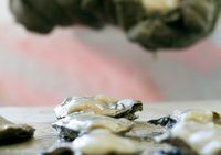 Enjoy the Discount at the Chesapeake Oyster and Beer Festival