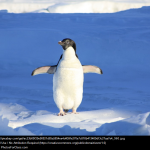 Free: World Penguin Day at Library of Congress