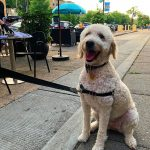 "Sababa Debuts Summer ""Pups on the Patio"" Promotion"